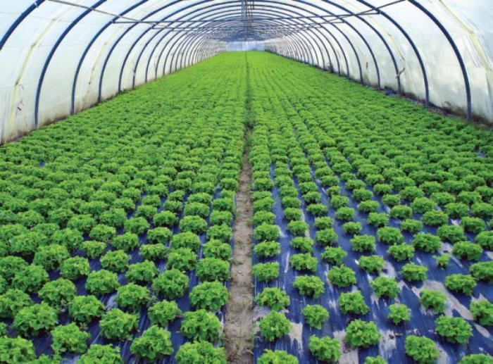 Manajemen Agribisnis dan Perikanan